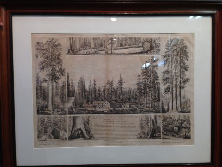 The Mammoth Tree Grove, Calaveras County California. Lapham & Haynes prop.rs Sketched from nature by T. A. Ayres, 1855. Printed by Britton & Rey. Drawn on stone by Kuchel & Dresel, 176 Clay S.T S. F. Entered according to Act of Congress, in the year 1855, by T. A. Ayres, in the Clerk's Office of the U.S. District Court for the Northern District of Cal. THOMAS A. AYRES.