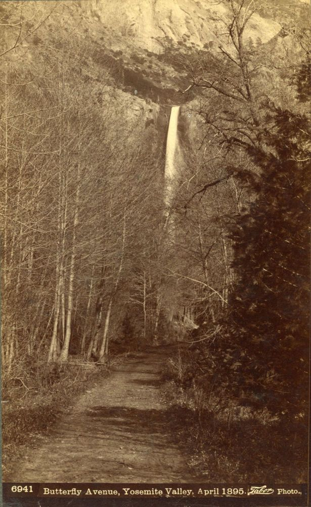 [Yosemite Valley] Butterfly Avenue, Yosemite Valley, April 1895. Albumen cabinet photograph. ISAIAH WEST TABER.