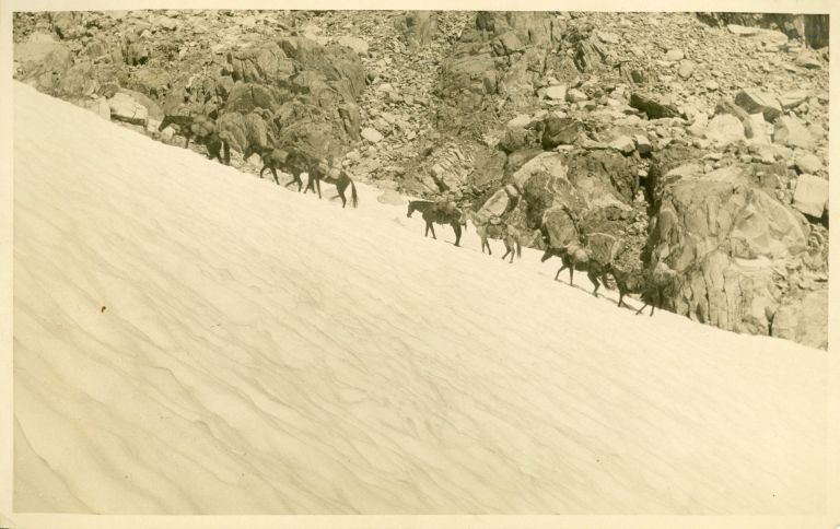 """[High Sierra] """"The ascent of Muir Pass by the pack train of California Alpine Club. 1923."""" Gelatin silver print. ANONYMOUS PHOTOGRAPHER."""