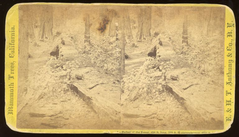 """[Calaveras Grove] """"Father of the Forest, 450 ft. long, 119 ft. in circumference, 37 1/2 ft. in diameter."""" Mammoth Trees, California, no. 4. ANTHONY, E. CO., H. T., publisher."""