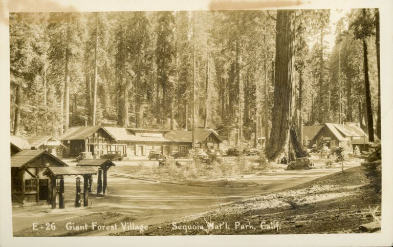 [Sequoia National Park] Giant Forest Village -- Sequoia National Park, Calif. No. E-26. Real photo postcard (RPPC). ANONYMOUS PHOTOGRAPHER.