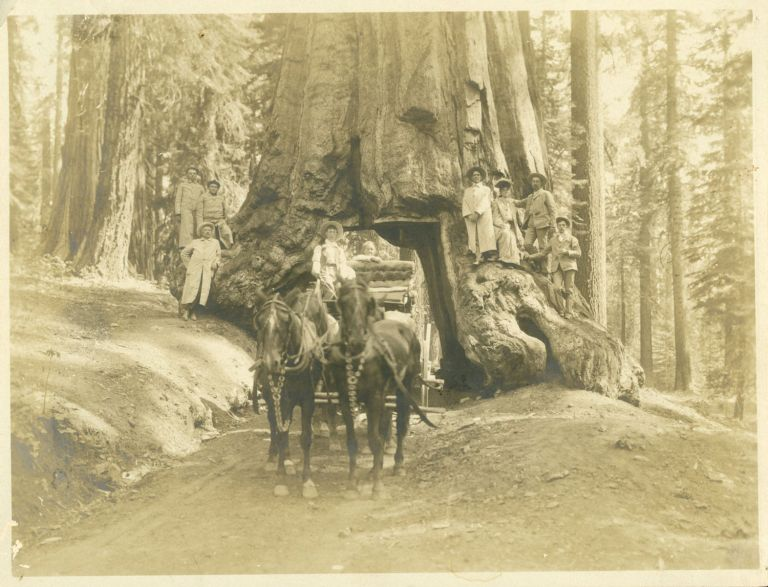 """[Mariposa Grove] """"Wawona"""" and tourist party [title supplied]. PUTNAM, PHOTOS VALENTINE."""