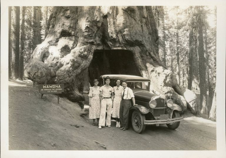 """[Mariposa Grove] """"Wawona"""" and tourist party [title supplied]. YOSEMITE PARK, CURRY CO."""