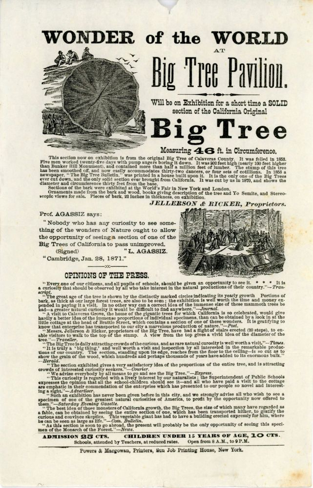 Wonder of the world at Big Tree Pavilion. Will be on exhibition for a short time a solid section of the California original big tree measuring 46 ft. in circumference. JELLERSON, PROPRIETORS RICKER.