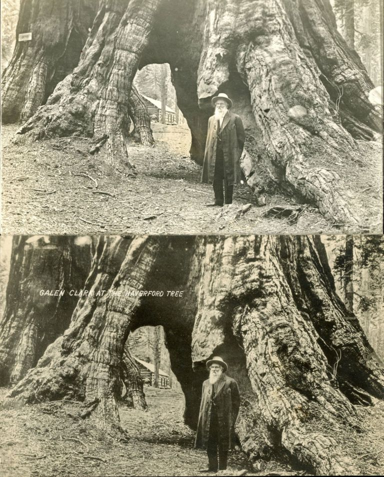 GALEN CLARK AT THE HAVERFORD TREE. [MARIPOSA GROVE OF BIG TREES.]. Galen Clark, Unidentified photographer.