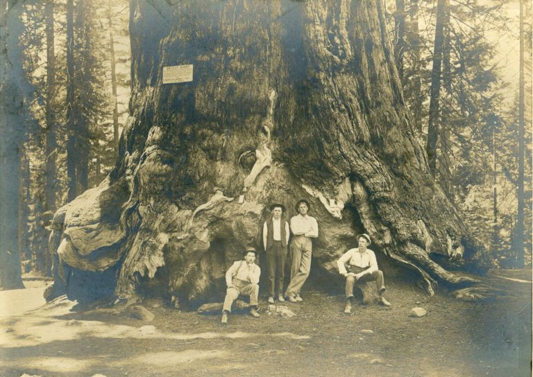 [Yosemite; Mariposa Grove] Four men in front of the Grizzly Giant [title supplied]. Gelatin silver print. Yosemite, Uncredited photographer.