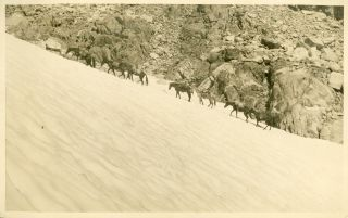 "High Sierra] ""The ascent of Muir Pass by the pack train of California Alpine Club. 1923."" Gelatin..."