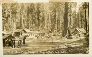 Sequoia National Park] Giant Forest Village -- Sequoia National Park, Calif. No. E-26. Real photo...