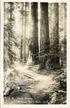 Sequoia National Park] Three Graces Sequoia Nat'l. Park, Calif. No. E-2. Real photo postcard...