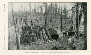 A primer of forestry. Part I -- the forest. By Gifford Pinchot, Forester [with] A primer of forestry. Part II -- practical forestry. By Gifford Pinchot, Forester.