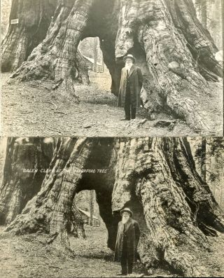 GALEN CLARK AT THE HAVERFORD TREE. [MARIPOSA GROVE OF BIG TREES.]. Galen Clark, Unidentified...