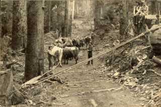 LUMBERJACKS USING A CHOCKER TO PULL A LOG ONTO A SKID ROAD [title supplied]. Dry-plate...