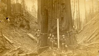 TWO PHOTOGRAPHS OF LUMBERJACKS AND LUMBERING, PROBABLY IN NORTHERN CALIFORNIA: LUMBERJACKS POSING...